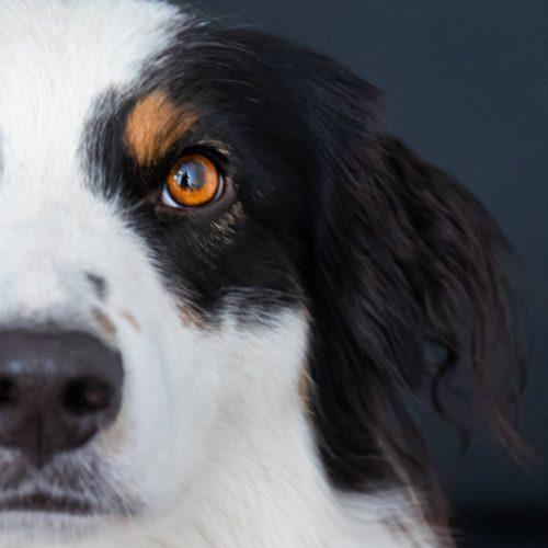 werbeagentur bremen agenturhund 1 500x500 - Agentur